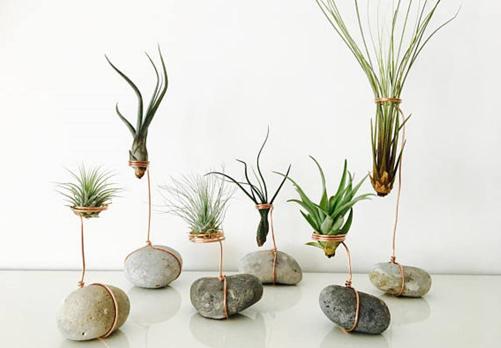 Tillandsias, TerrariaArt - BnbStaging le blog